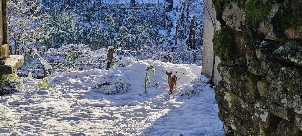 neve nas ruas