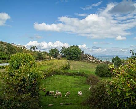 paisagem campos verdes adsamo